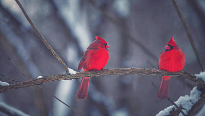 Winter Landscape Photograph - Birds Of A Feather by Carrie Ann Grippo-Pike
