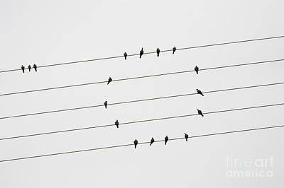 Photograph - Birds Of A Feather by Diane Macdonald