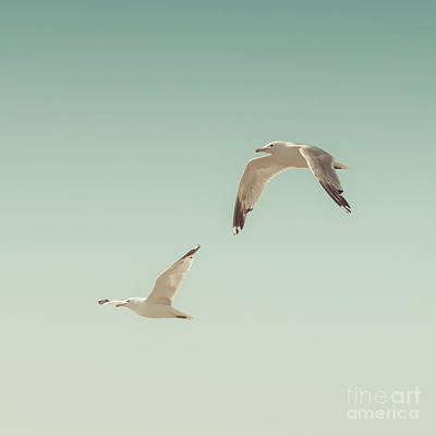 Seagulls Photograph - Birds Of A Feather by Lucid Mood