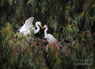 Photograph - Birds Of A Feather by Melinda Hughes-Berland