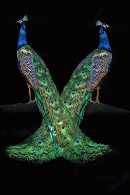 Peacock Photograph - Birds Of A Feather by Stephanie Laird