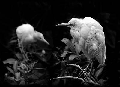 Photograph - Birds Of A Feather by Wayne Sherriff