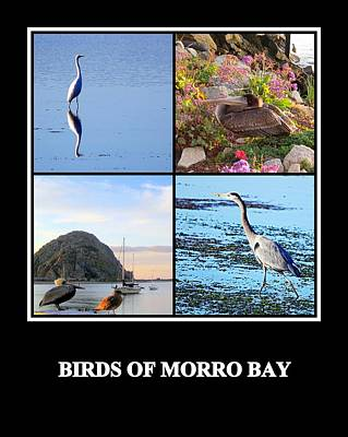 Photograph - Birds Of Morro Bay by AJ  Schibig