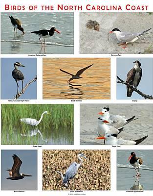 Birds Of North Carolina Coast Art Print by Dana Sohr