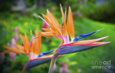 Honolulu Photograph - Birds Of Paradise by Sean  James G