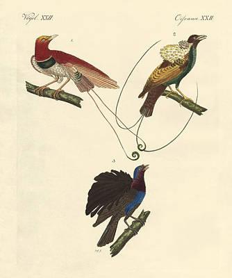 Bird Of Paradise Drawing - Birds Of Paradise by Splendid Art Prints