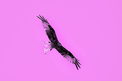 Birds Of Prey Art Print by Tommytechno Sweden