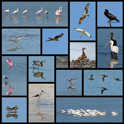 Photograph - Birds Of The Click Ponds by Dawn Currie
