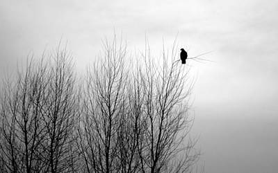 Photograph - Birds Of Winter I by AJ  Schibig