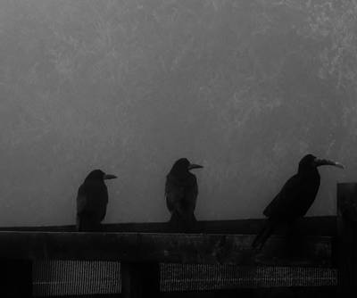 Birds On A Fence Art Print by Michelle O'Neill