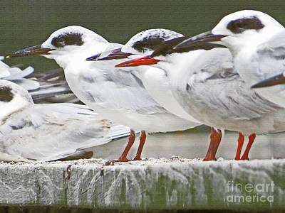 Birds On A Ledge Art Print