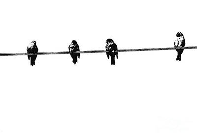 Photograph - Birds On A Wire 3 by Nina Silver