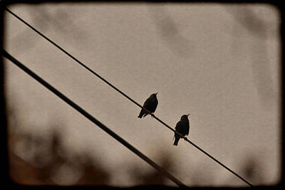 Photograph - Birds On A Wire by Beth Sawickie