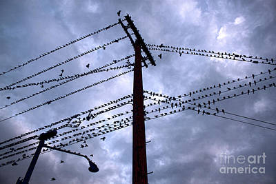 Photograph - Birds On A Wire In Blue by Gregory Dyer