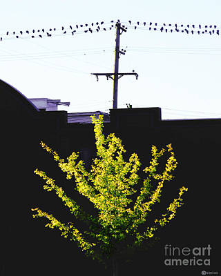Digital Art - Birds On A Wire In Cooper Young by Lizi Beard-Ward