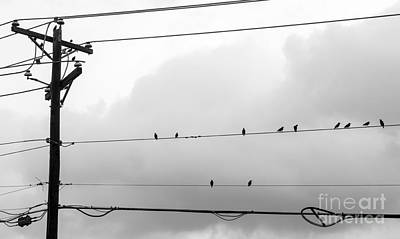 Photograph - Birds On A Wire by Imagery by Charly