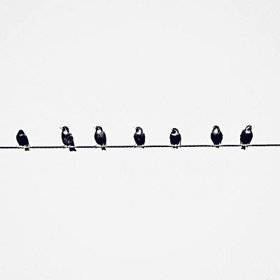Birds On A Wire Photograph - Birds On A Wire by Jessie Gould