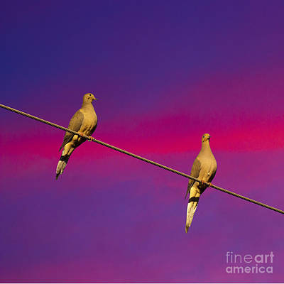 Photograph - Birds On A Wire by Michael Waters