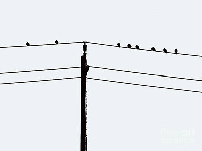 Photograph - Birds On A Wire by Nina Silver