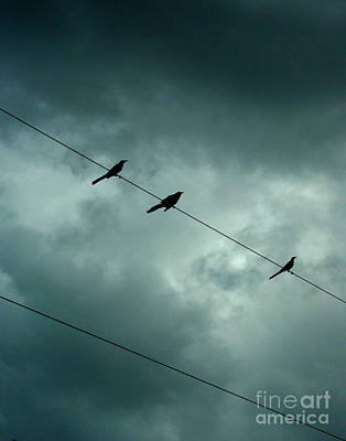 Photograph - Birds On A Wire by Peter Piatt