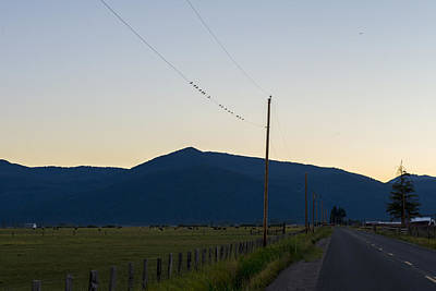 Photograph - Birds On A Wire by Spencer Bodian