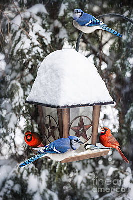 Curated Beach Towels - Birds on bird feeder in winter by Elena Elisseeva
