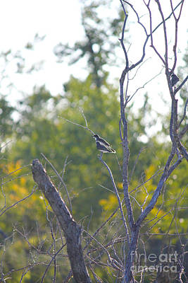 Photograph - Birds On Branches by Donna Munro
