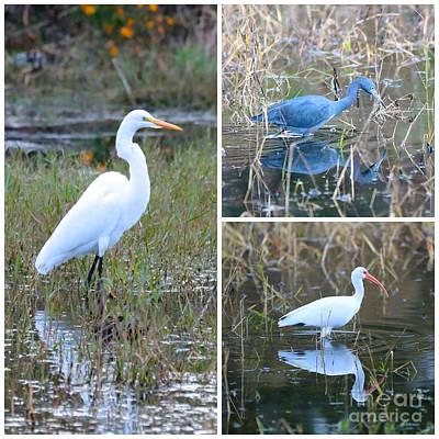 Heron Photograph - Birds On Pond Collage by Carol Groenen