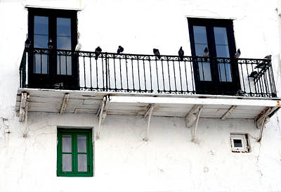 Photograph - Birds On Railing by Haleh Mahbod
