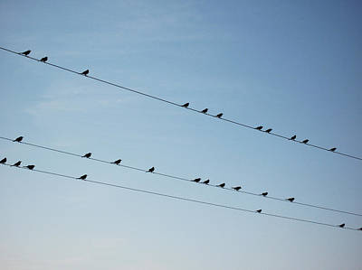 Birds On Telephone Lines Art Print by Carl Purcell