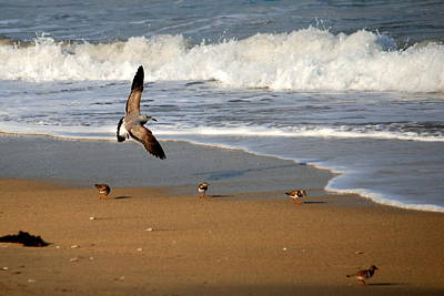 Photograph - Birds On The Beach by Larry Ward