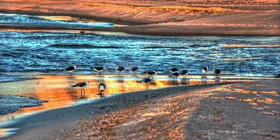 Digital Art - Birds On The Beach by Michael Thomas