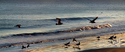 Marin County Digital Art - Birds On The Beach Point Reyes National Seashore by Wernher Krutein