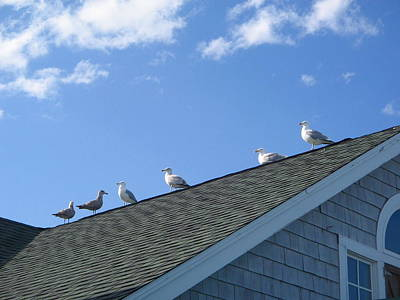 Photograph - Birds On The Roof by Denise Mazzocco