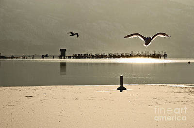 Photograph - Birds On Thine Ice by Brian Arnold