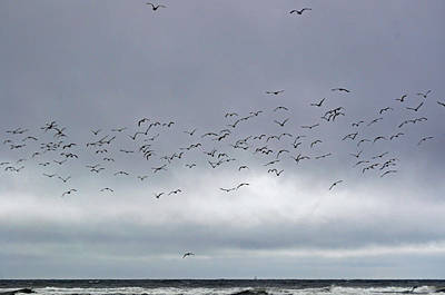 Photograph - Birds Over The Pacific by Tikvah's Hope