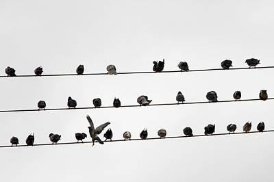 Photograph - Birds Pattern by Ricardo Lima