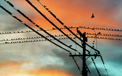 Of Birds Photograph - Birds Perching On Telephone Lines by Panoramic Images