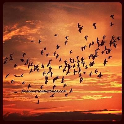 Animals Wall Art - Photograph - #birds #photography #sunset #fly by Mandy Shupp