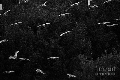 Photograph - Birds Returning To The Roost by Dan Friend