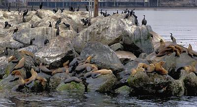 Photograph - Birds Seals And Sea Lions by Elery Oxford