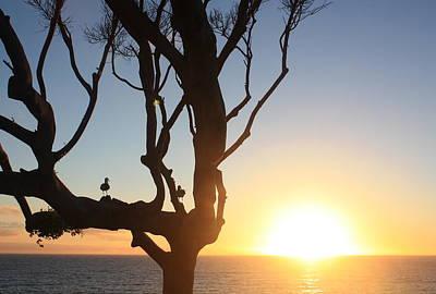 Photograph - Birds Watching Sunset by Daniel Schubarth
