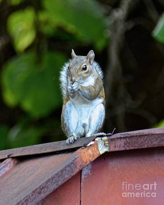 Photograph - Birdseed Thief by Carol  Bradley