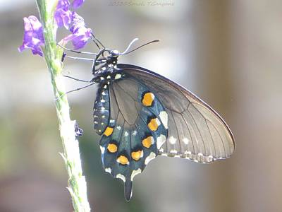 Nature At Its Best Photograph - Birdwinged Butterfly by Sonali Gangane
