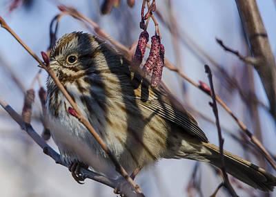Photograph - Birdy by David Martorelli