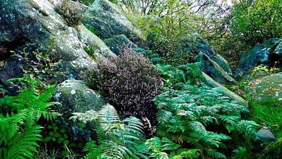 Birk Crag Foliage Art Print