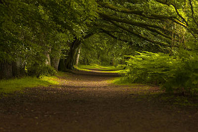Photograph - Birnam Woods Landscape Wall Art by Alex Saunders