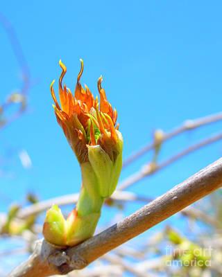 Photograph - Birth Of A Leaf  by Heidi Manly