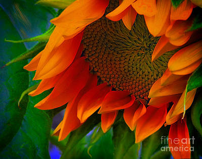 Birth Of A Sunflower Art Print by John  Kolenberg