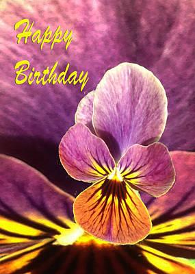 Martinspixs Photograph - Birthday Pansy Flower  by Martin Matthews